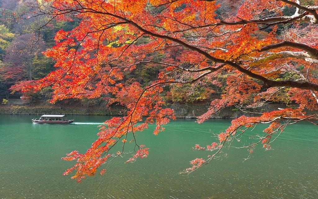 Katsura Trees Varieties