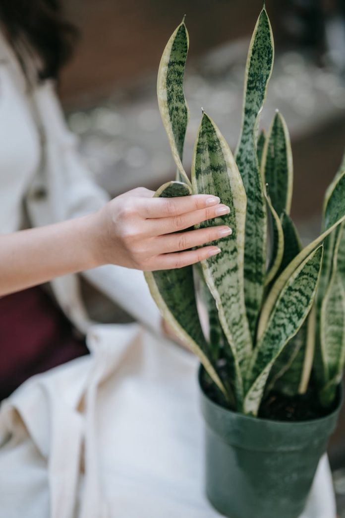 finger plants